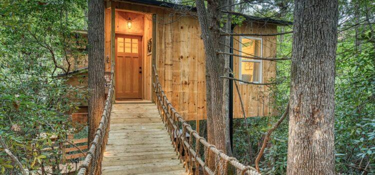 Unique Spaces: Tree House